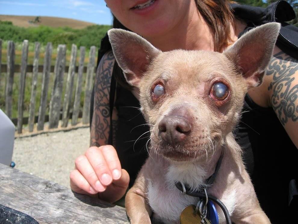 Кто на свете всех страшнее или самые некрасивые породы собак |