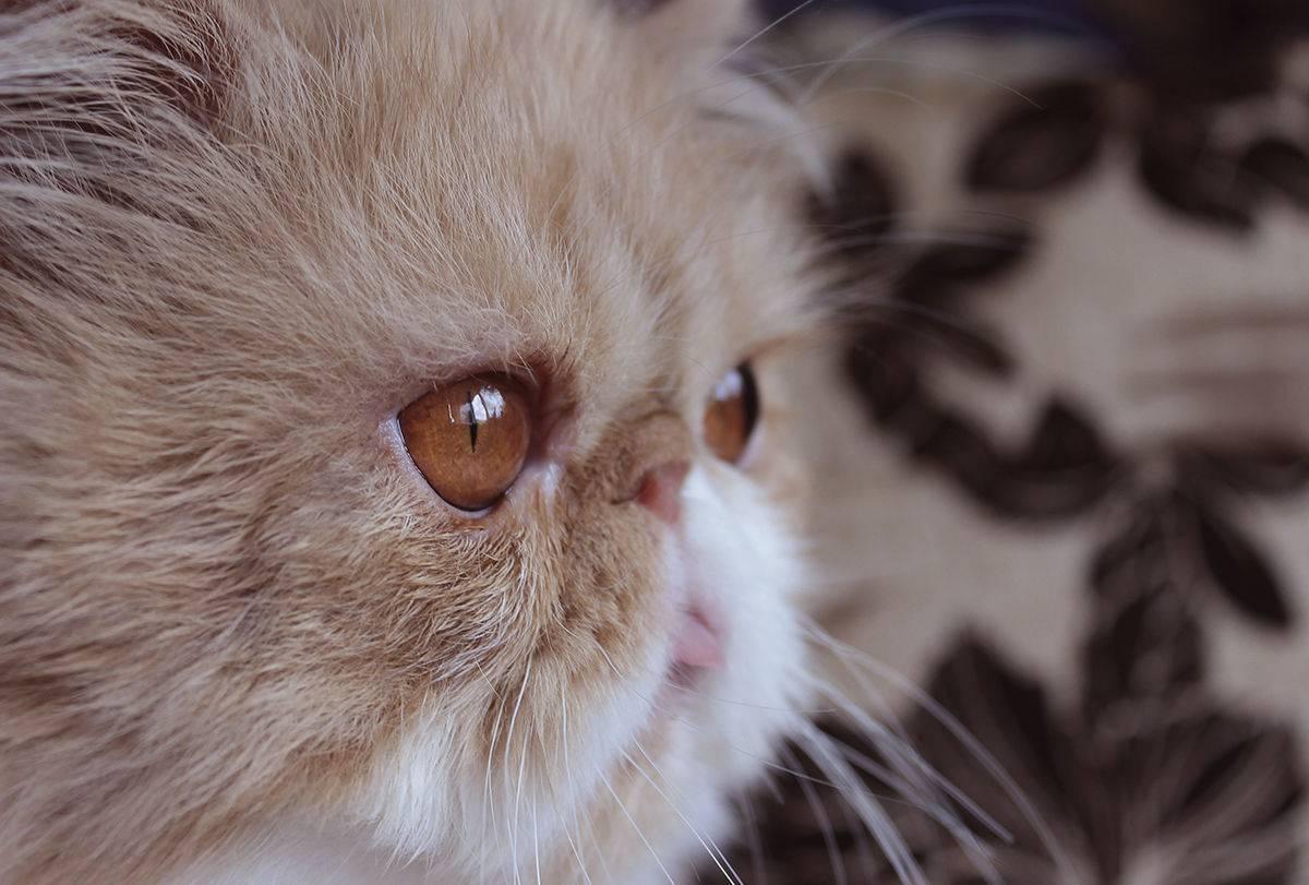 Какой должен быть нос у здоровой кошки: нормы и отклонения, тревожные симптомы, как осмотреть нос коши