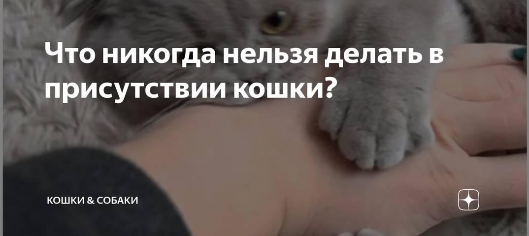 Что нельзя делать с кошкой