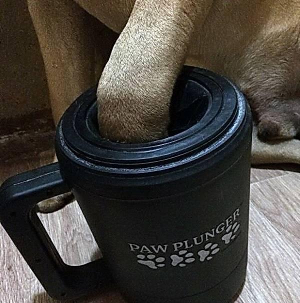 Лапомойка для собак – как она работает?