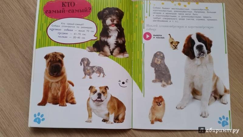 Правильное воспитание щенка: основы дрессуры. как воспитывать щенка в 1 месяц правильно: обучение основным командам . милая я