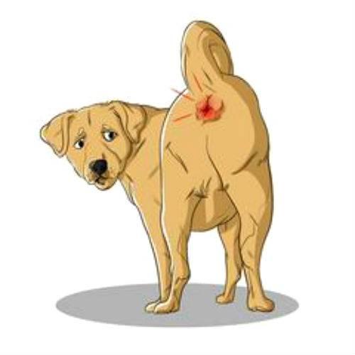 Кишечная непроходимость у собак - симптомы, лечение