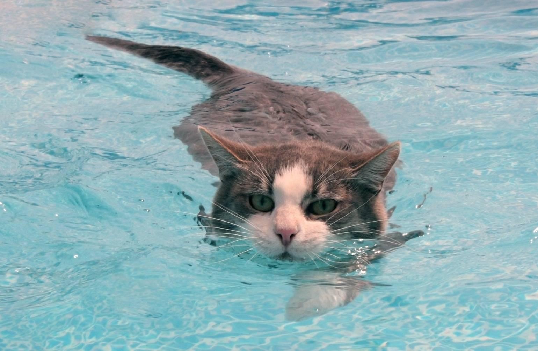 6 пород кошек, которые любят «человеков» больше всех — 4 лапки