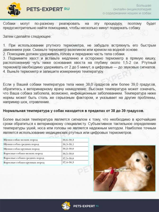 Гипотермия (пониженная температура тела) у кошек