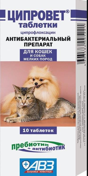 Ципровет для кошек: показания к применению и дозировки