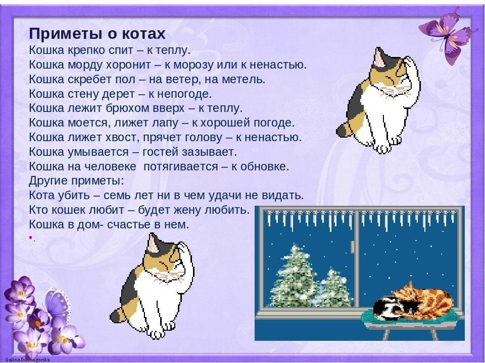Кошки в доме и на улице — приметы, суеверия, поверья про черных, белых, серых, рыжих, трехцветных кошек. к чему кошка ушла из дома, пришла в дом, умывается, рожает, чихает, гадит, сидит на окне, в новом доме, квартире, перебегает дорогу, умирает?