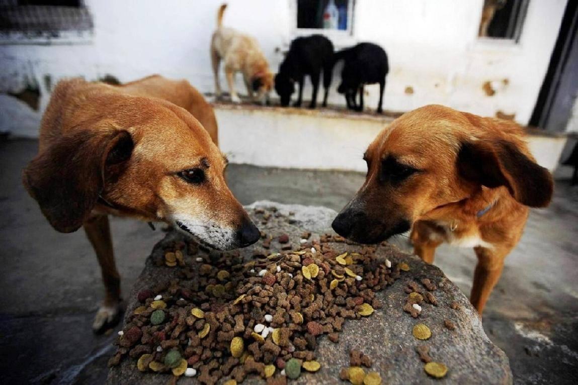 Почему собака ест землю: причины извращенного аппетита
