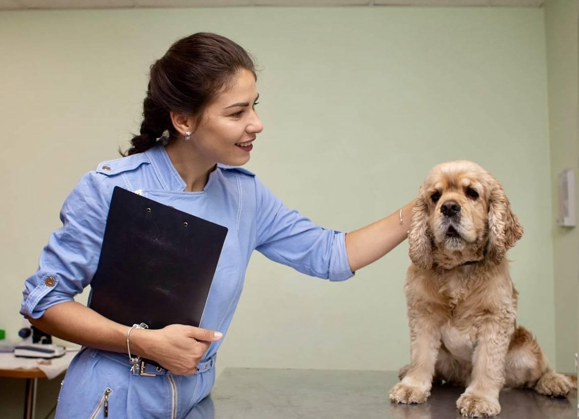 Ветеринарная клиника ласка — главная страница