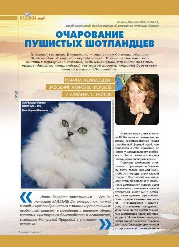 Как открыть питомник кошек?