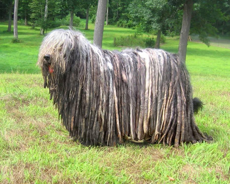 Топ-69 редких пород собак