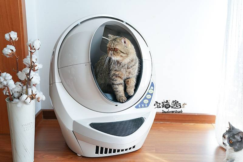 Автоматический туалет для кошек — что это такое? виды самоочищающихся туалетов и правила выбора