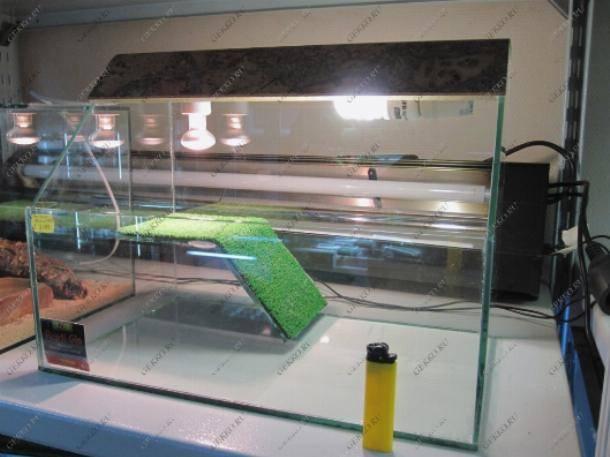 Уф лампа для черепах и ящериц. как сделать правильный выбор?