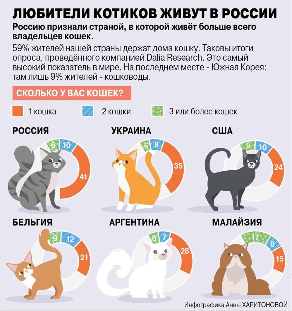 Собака на даче: 9 главных правил техники безопасности - gafki.ru