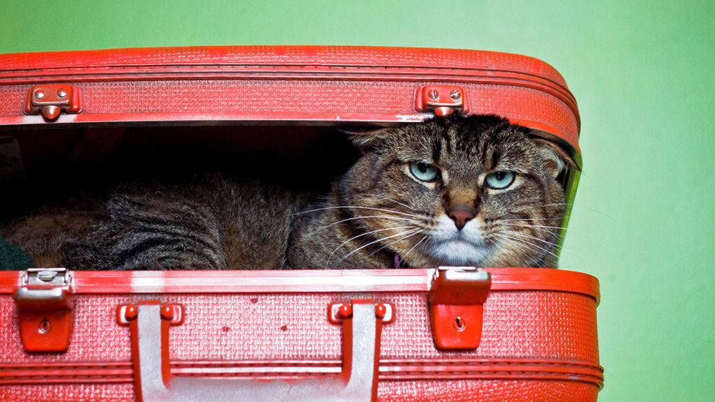 Кошка в новом доме, переезд кошки в новый дом, фото, процесс адаптации кошки в новом доме, переезд кошки в городскую квартиру