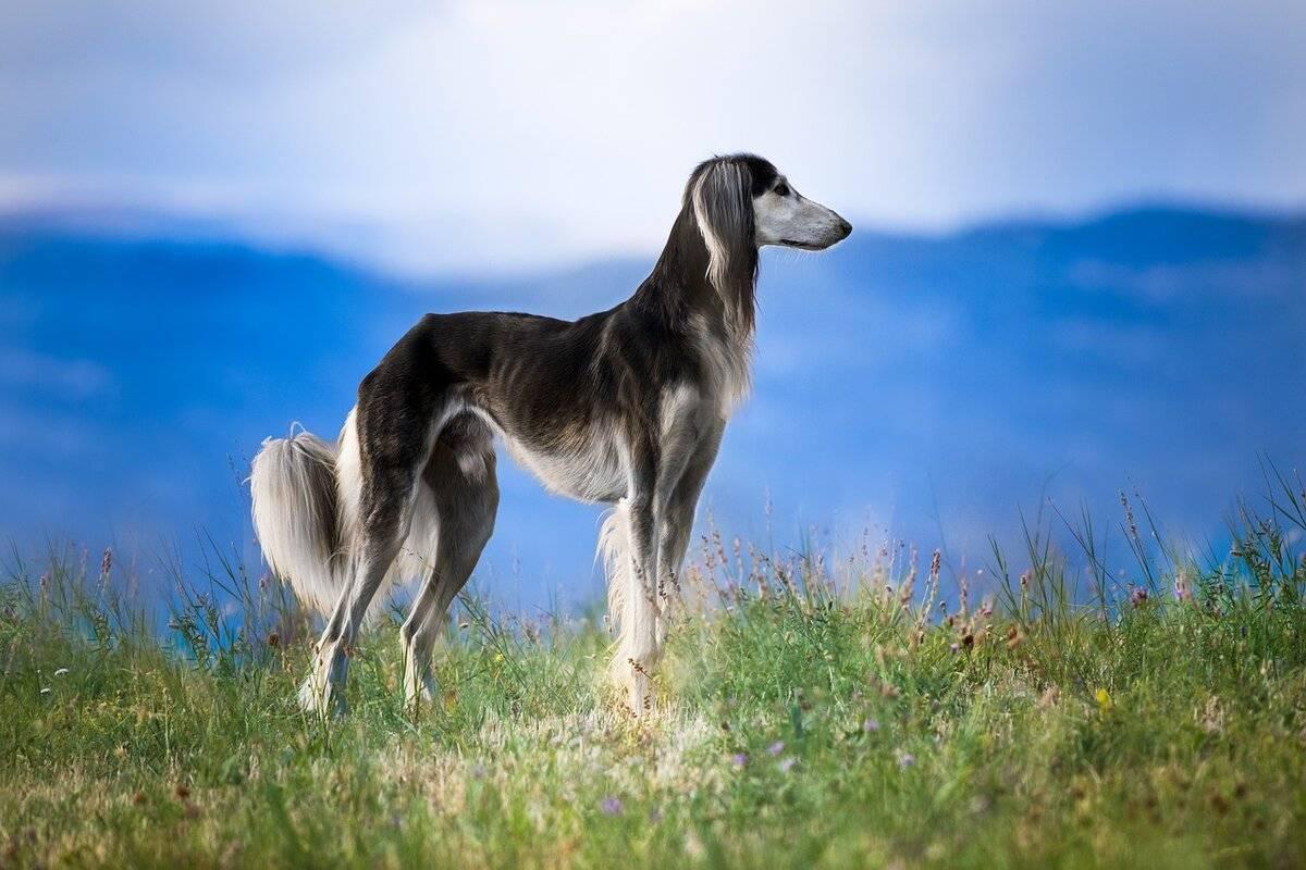 Охотничьи собаки. описание, особенности и названия охотничьих пород собак | животный мир