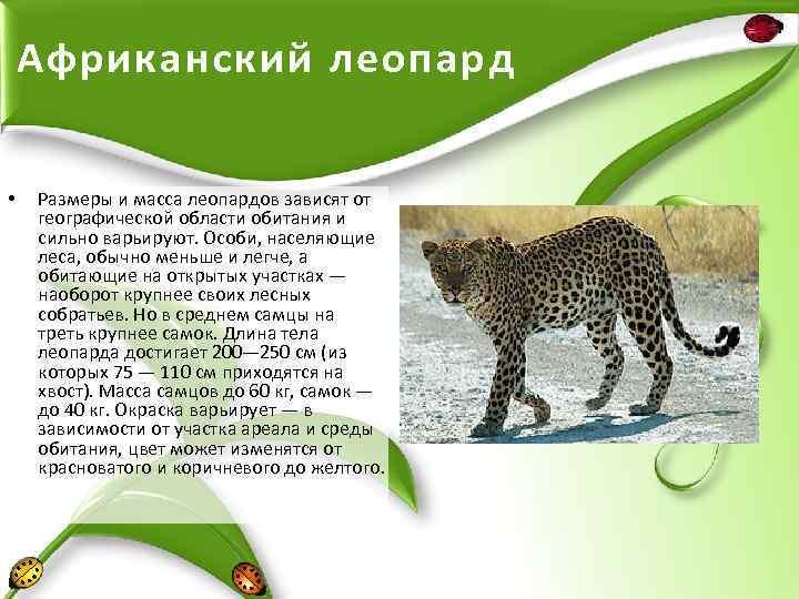 Лесной кот: образ жизни и описание дикого животного, характер и повадки, размножение и содержание в неволе