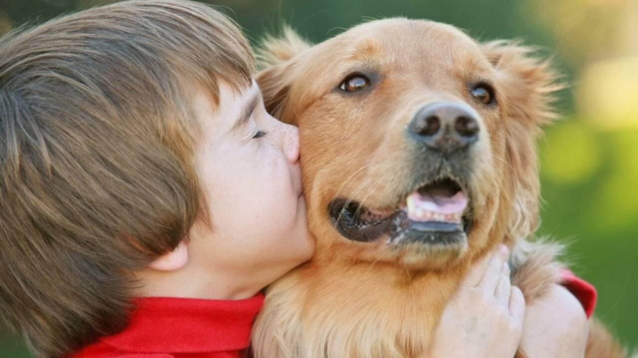 Лучшие породы собак для квартиры: названия, фото, описание, какую завести из маленьких, средних, больших пород