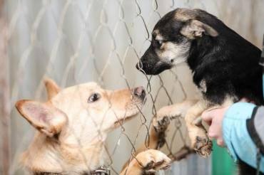 Самые милые собаки в мире: топ-10