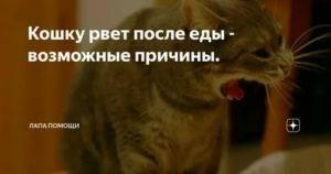 Если кошку рвет, что делать?