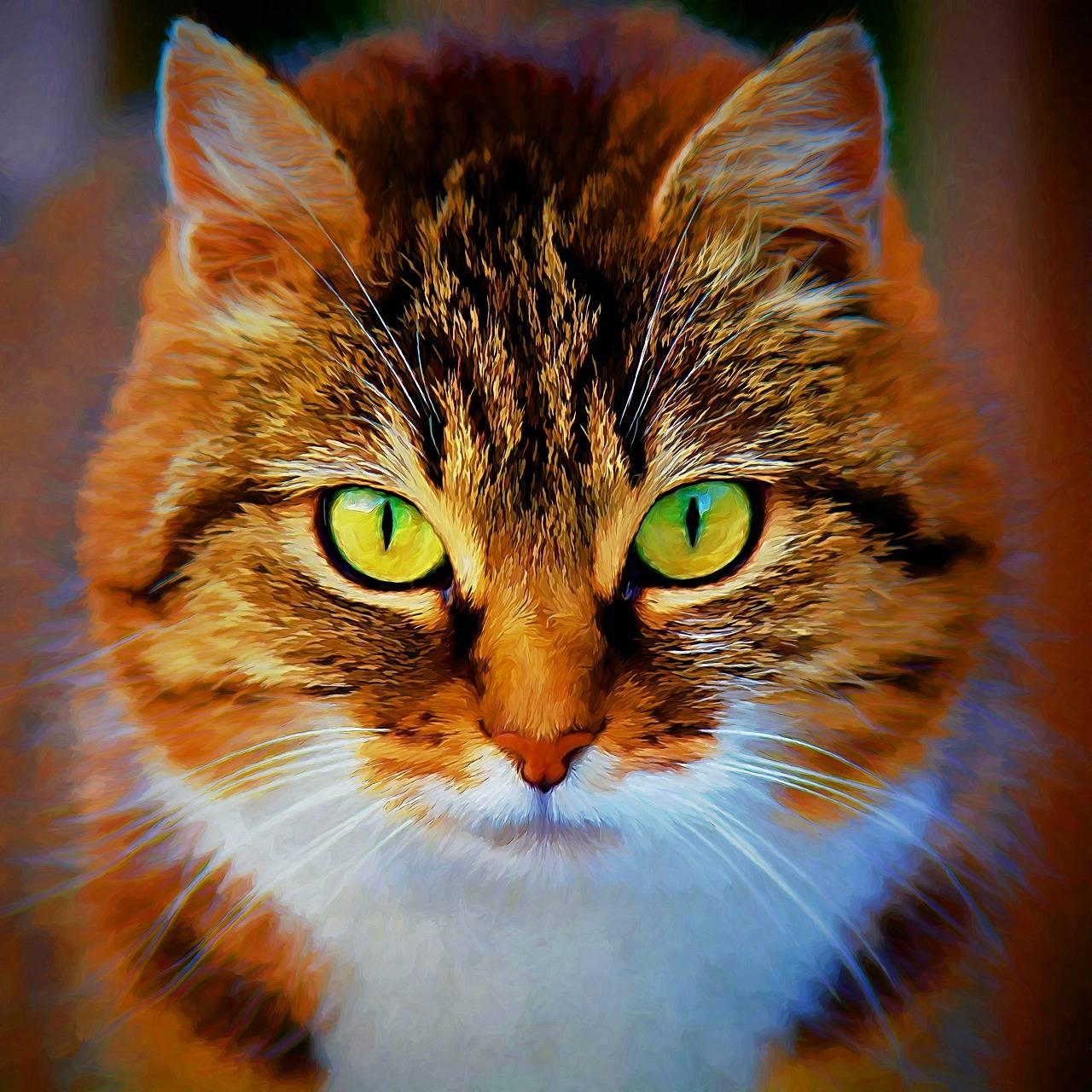 Выбираем кто лучше кот или кошка и развенчиваем стереотипы