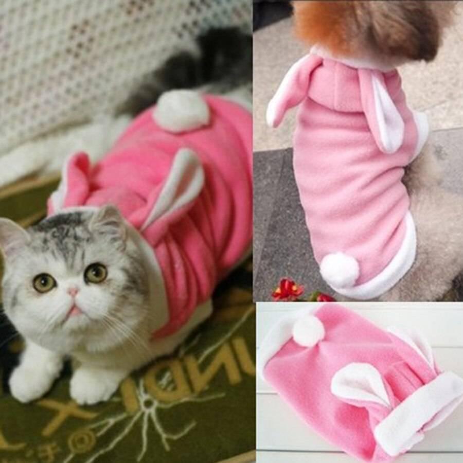 Одежда для кошек своими руками: как сделать выкройку и сшить комбинезон или кофту?