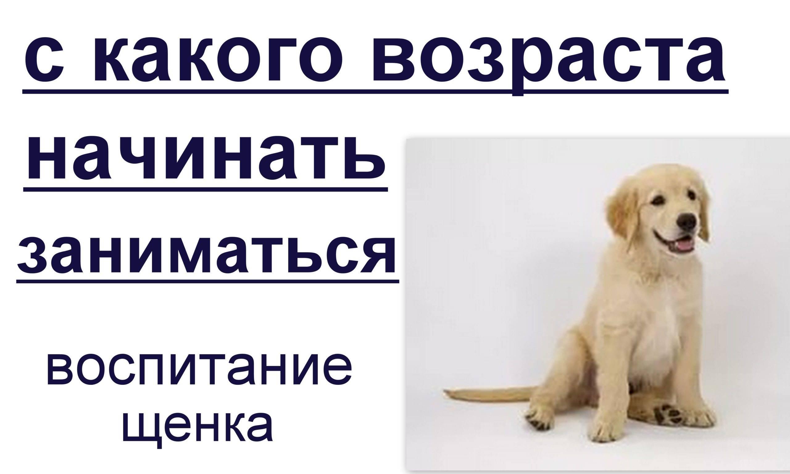 Этапы взросления щенка - советы кинолога сергея томилова на dogrf.ru