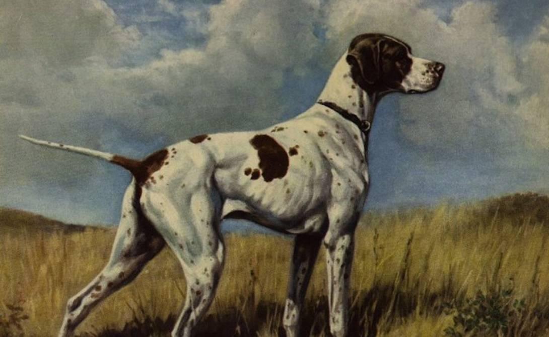 Вымирающие породы собак: очень редкие, их осталось всего несколько во всем мире