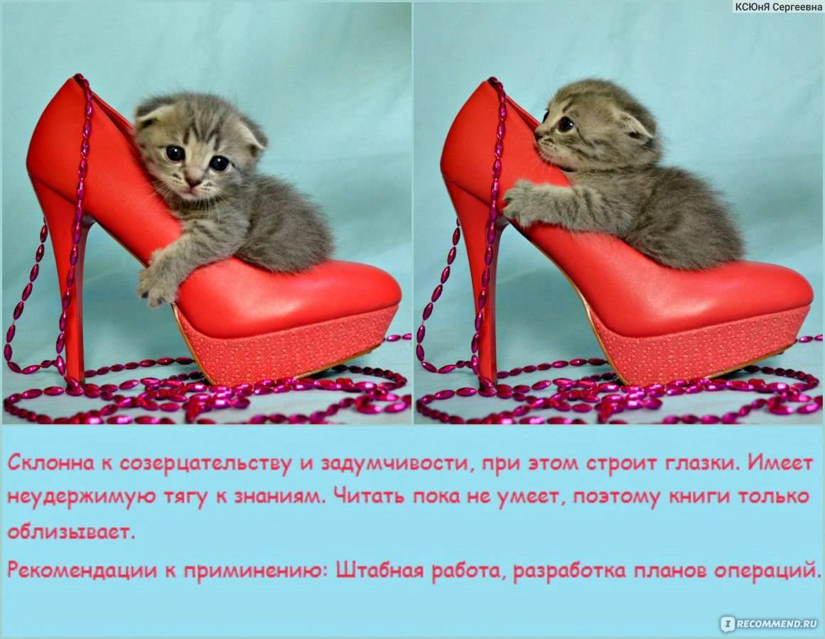 8 самых умных пород кошек - лайфхакер