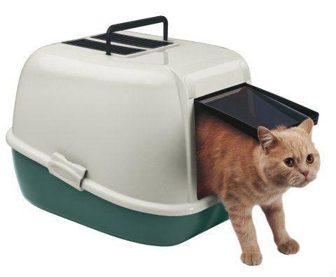 Закрытый лоток для кошек: обзор чудо-приспособления