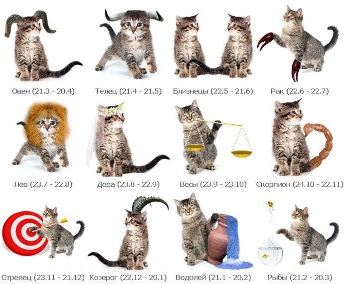 Питомец по знаку зодиака: как выбрать домашнее животное по гороскопу — 4 лапки