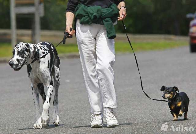Как отучить собаку тянуть поводок во время прогулки