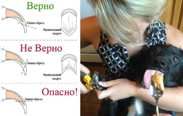 Как подстричь мордочку йорку: самостоятельный груминг