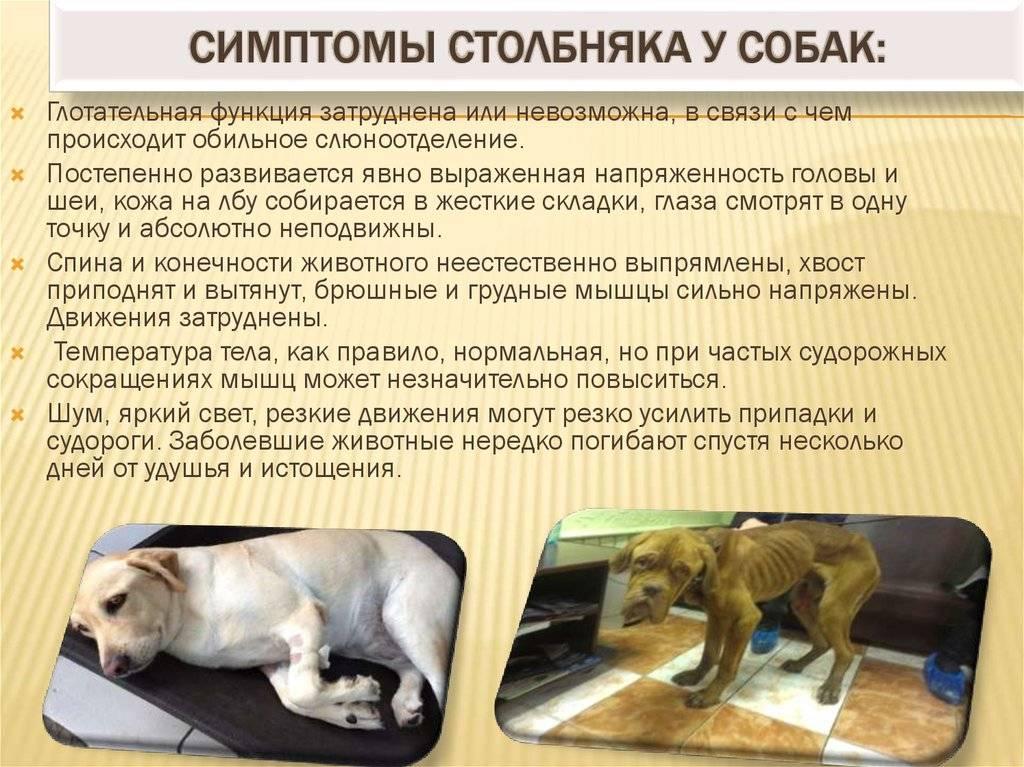 Гепатит у кошек и котов  симптомы и лечение