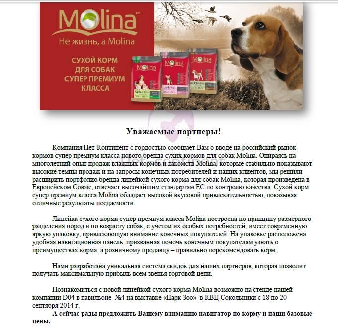 Классы кормов для собак: какие бывают и в чем разница между ними?
