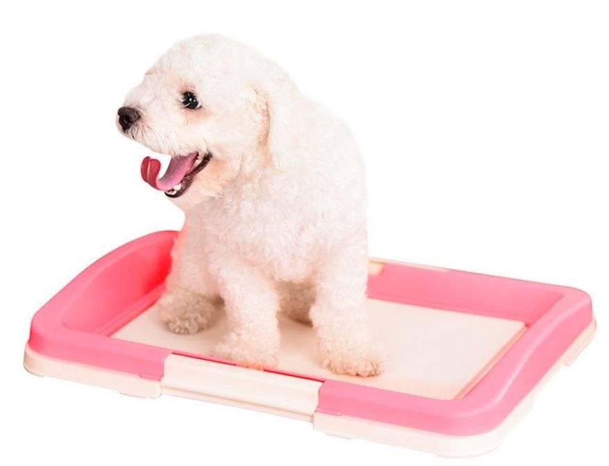 Туалет для собак со столбиком для чего