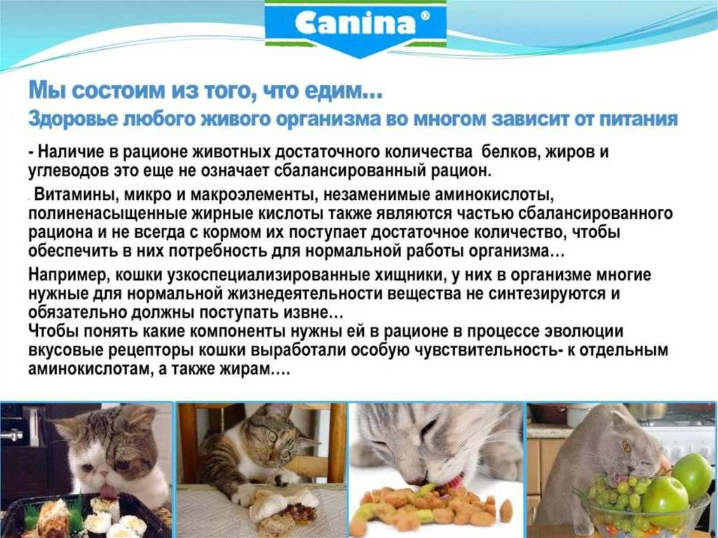 Чем кормить новорожденных котят без кошки в домашних условиях