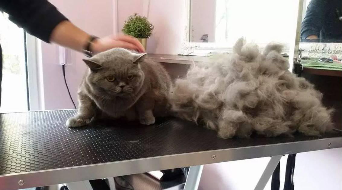 Если кошка сильно линяет