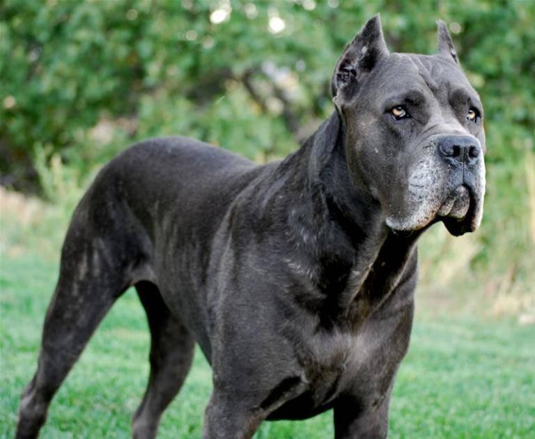 Топ-10 самых сильных собак в мире