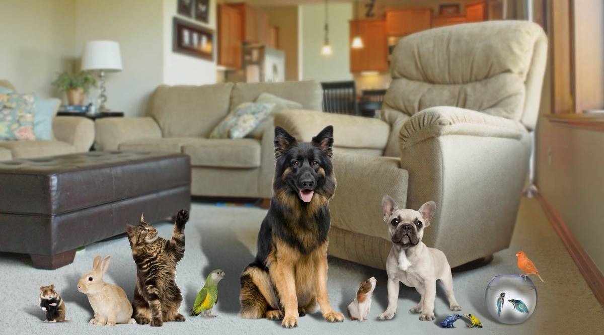 Какие собаки уживаются и дружат с кошками?