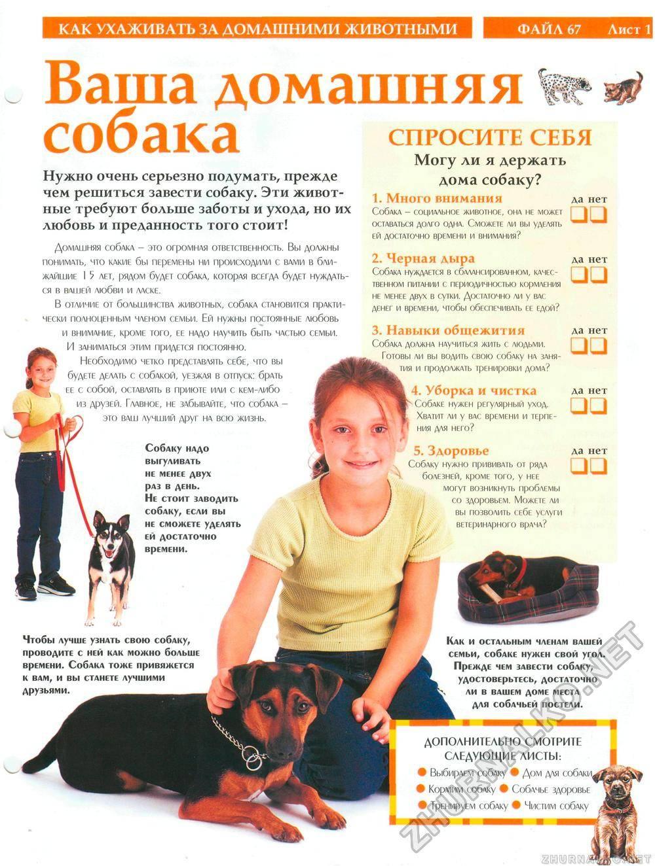 Пушистые собаки: как ухаживать? - интересное про собак