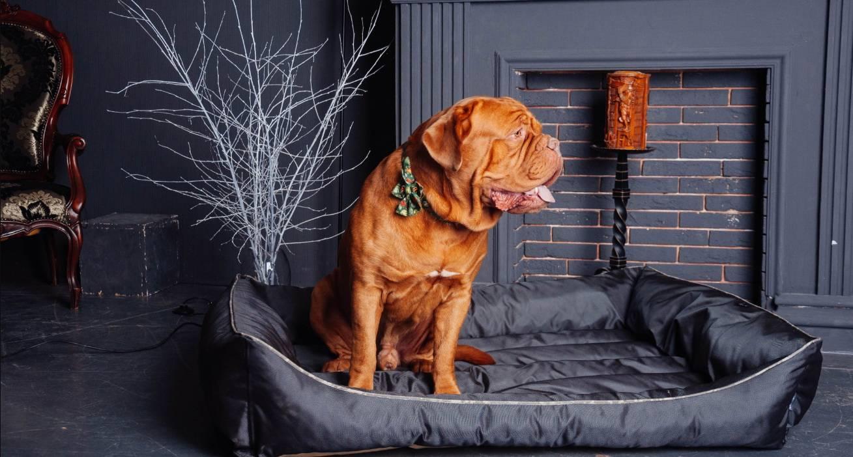 Как выбрать лежанку для собаки - магазин harley and cho