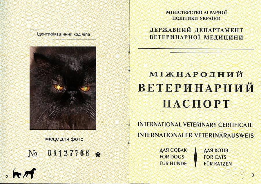 Ветеринарный паспорт для кошки: как получить, правильно заполнять и стоимость его оформления?