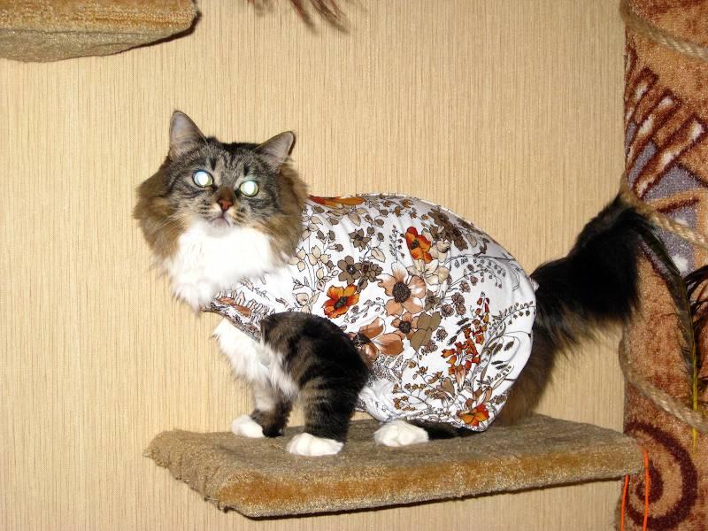 Как надеть на кошку попону и правильно ее завязать?