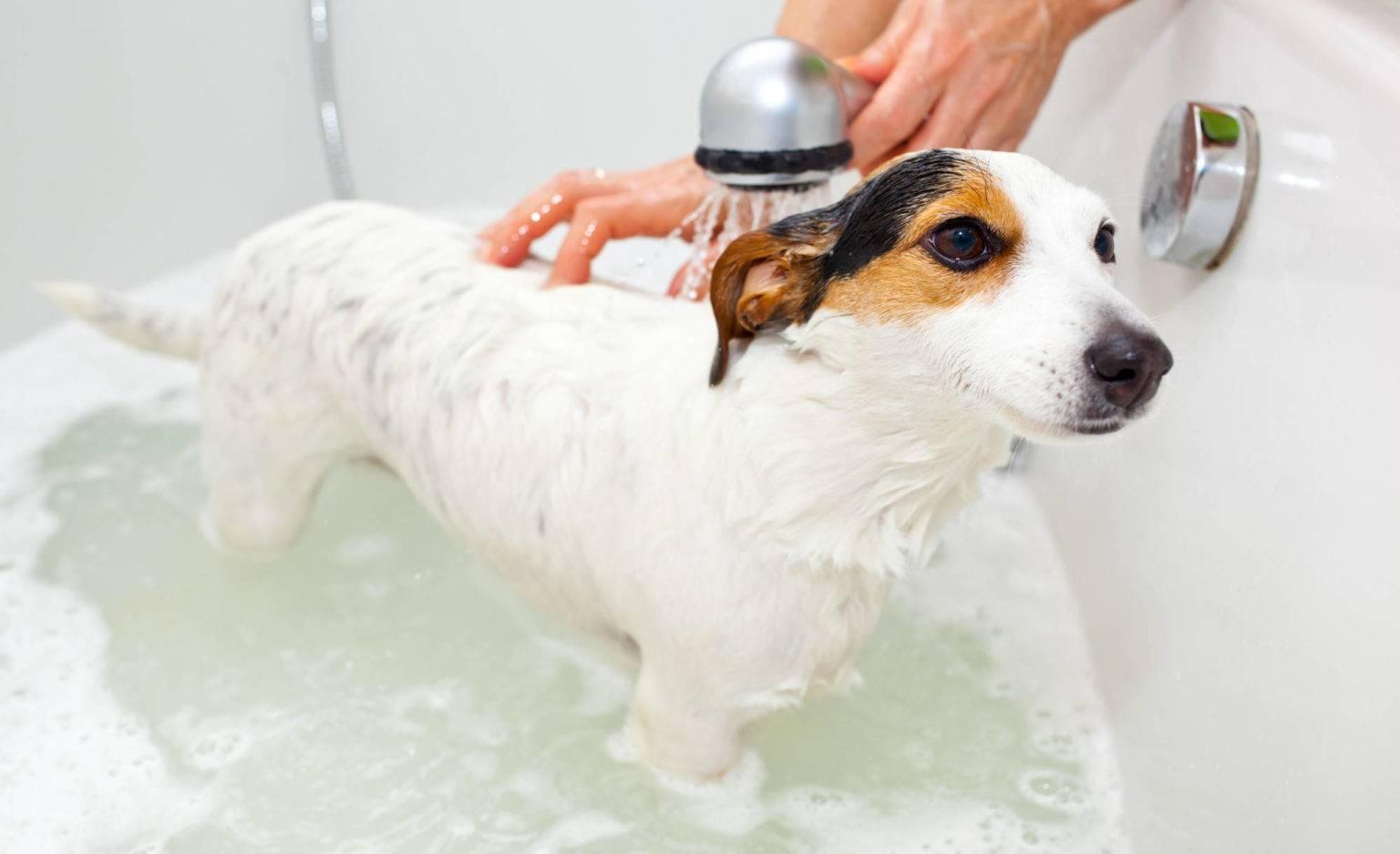 Можно ли купать собаку с помощью дегтярного или хозяйственного мыла