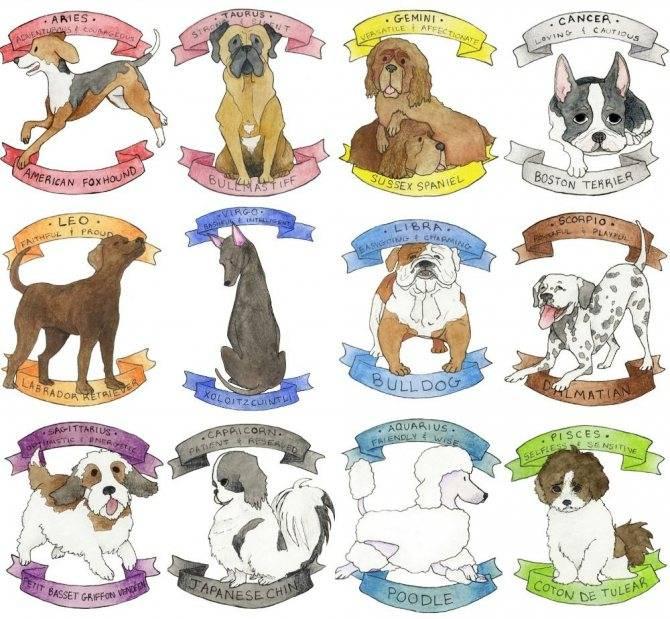 Какая собака подходит вам по знаку зодиака.