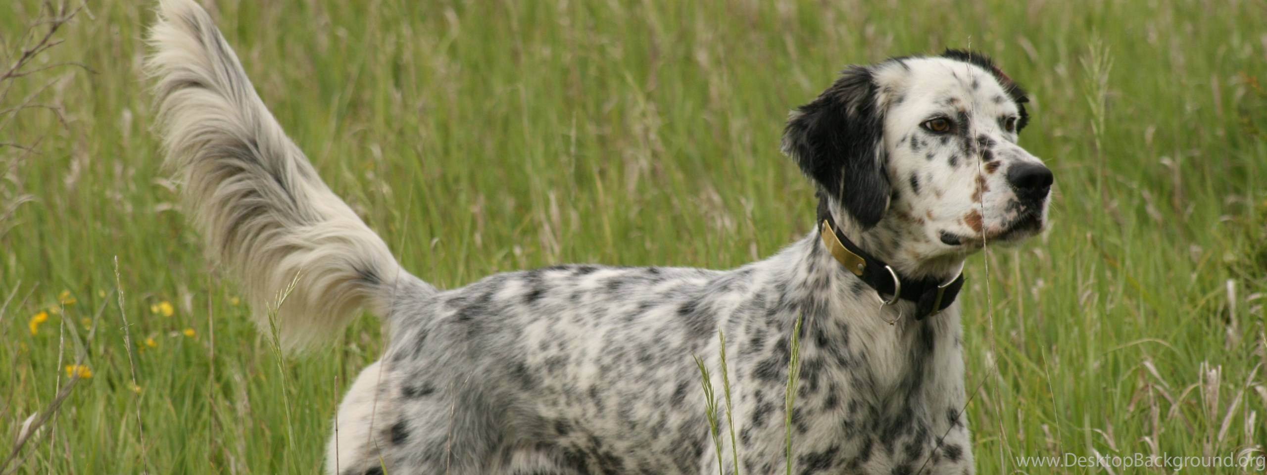 Грозные клички для собак, имена для щенков мальчиков и девочек.