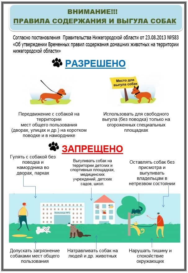 Правила содержания собак в многоквартирном или частном доме: нормы и закон