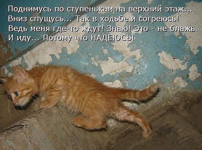 Умеют ли кошки плакать – причины слез