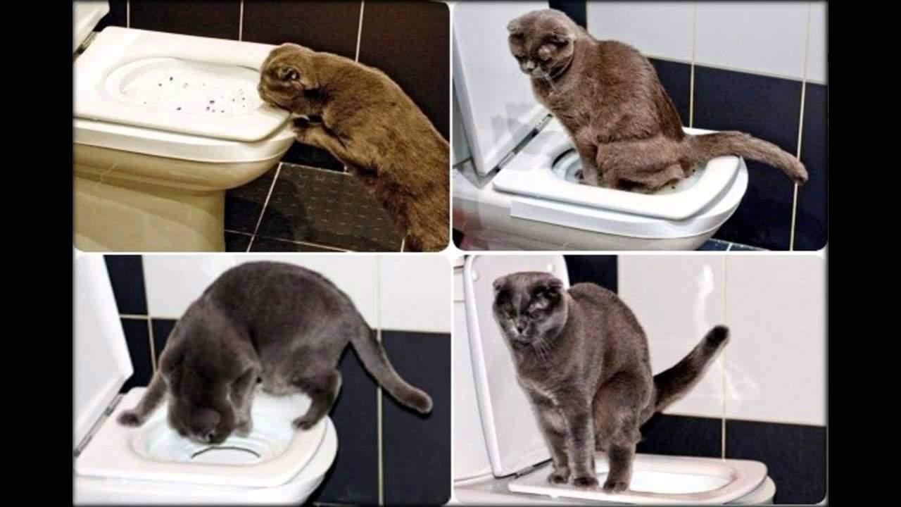 Кошка мало писает: почему, симптомы, причины, как помочь