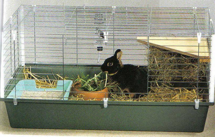 Декоративные кролики - уход и содержание в домашних условиях